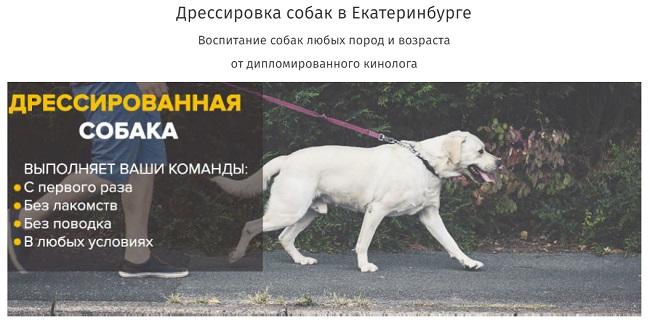 daj-lapu.com - школа воспитания и дрессировки собак в Екатеринбурге