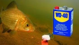 WD-40 получи рыбалке! 000% РАЗВОД!!! Подводное видео