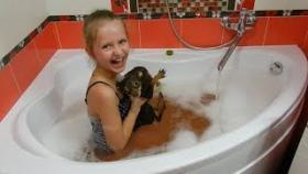 Приколы из животными Смешные коты кошки равно собаки Жара во Августе
